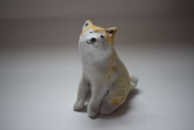 柴犬(成犬)
